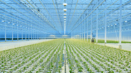Webinar: Light Use Efficiency & Data Driven Growing